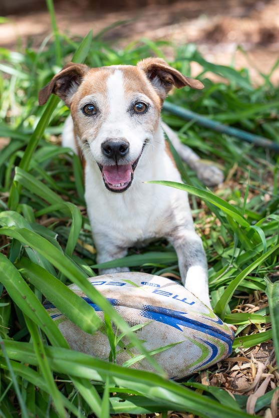 Photo of Jack Russel